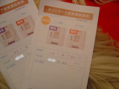 DSC01180_convert_20110501152521.jpg