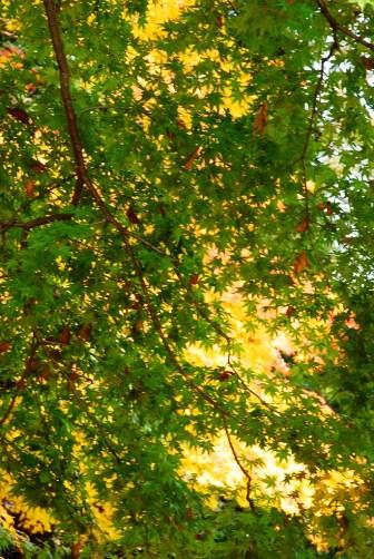 黄緑×黄色