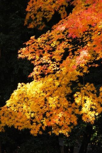 黄色×オレンジ②