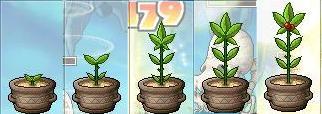 2・24植木鉢1