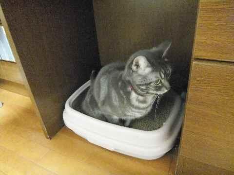 おトイレ1
