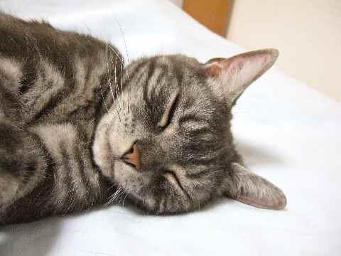 おやしゅみ~♪