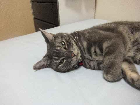 ストレスなしの猫2