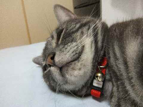 ストレスなしの猫3