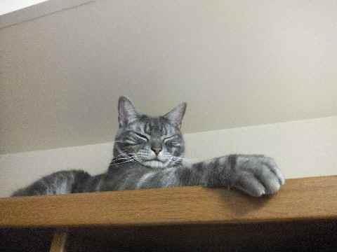 ネコの手1