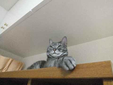 ネコの手2