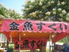金魚20100724