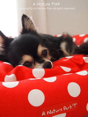 愛犬ベッド♪