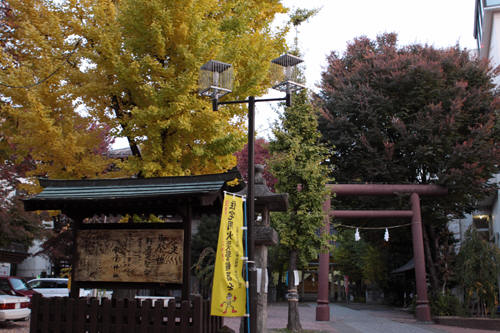 秋葉神社の銀杏と鳥居