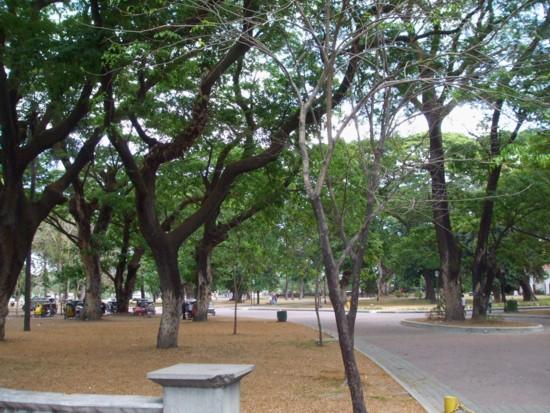 Tarlac Park2