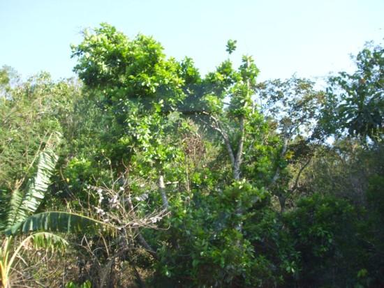 Bolinao slope
