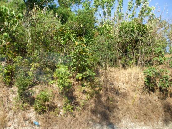 Bolinao slope2