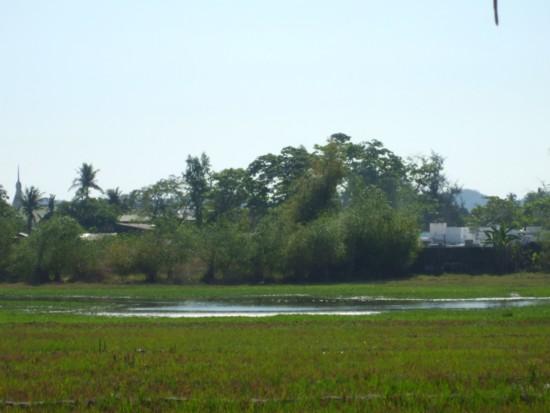Alaminos pond