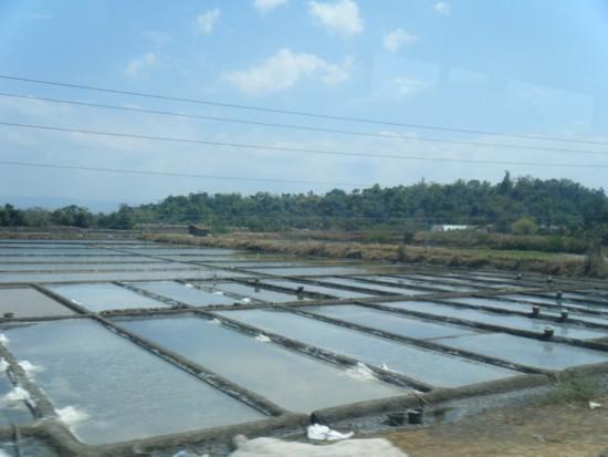 Salt field 3
