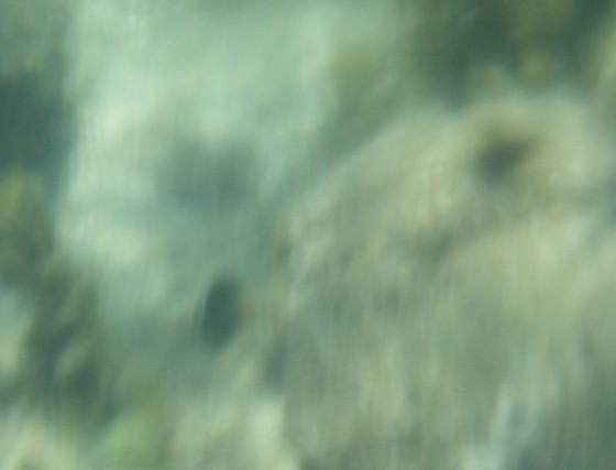 la laguna f1