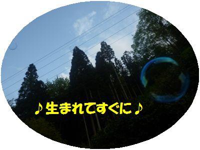 image10_20110508140556.jpg