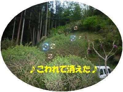image11_20110508140556.jpg