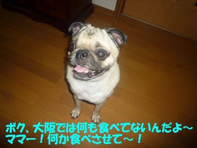 image15_20110508142421.jpg