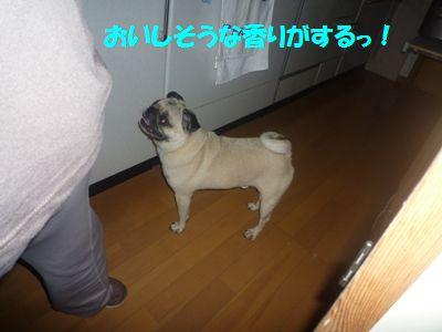 image16_20110508142422.jpg