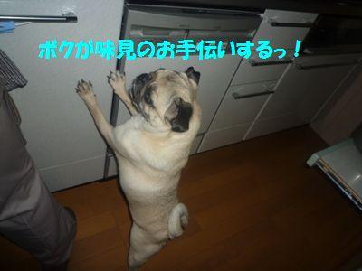 image17_20110508142422.jpg