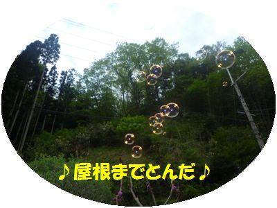 image2_20110508133000.jpg