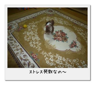 image3_20110506010112.jpg