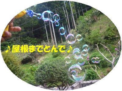 image3_20110508133000.jpg