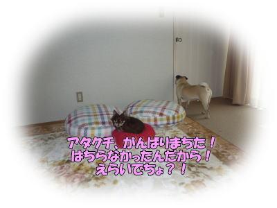 image3_20110510210355.jpg