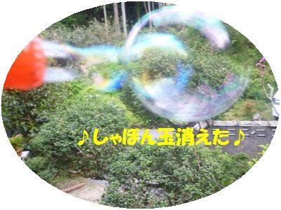 image8_20110508140557.jpg