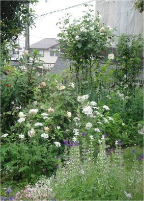 anise garden