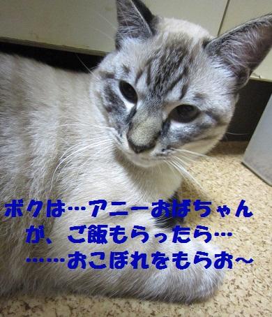 168_20100524005335.jpg