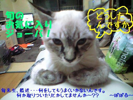 syunn_20100202232848.jpg