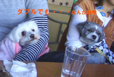 2010_01240008.jpg