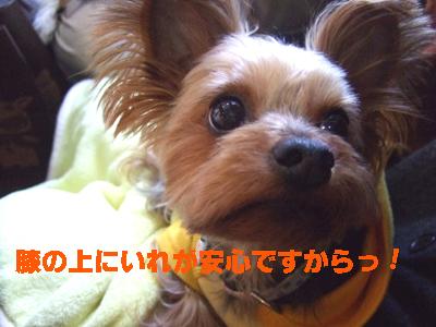 2010_01240009.jpg