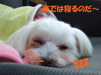 2010_02190021-1.jpg