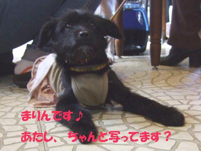 2010_02200002.jpg