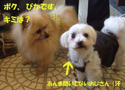 2010_02200003.jpg