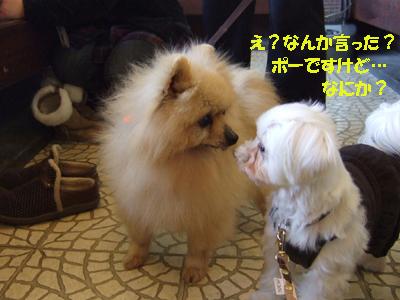 2010_02200006.jpg