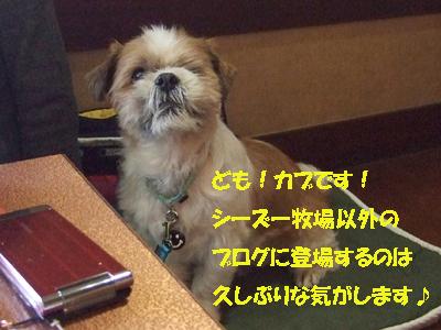 2010_02200014.jpg