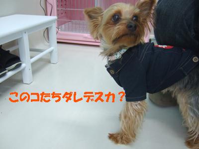 2010_02250011.jpg