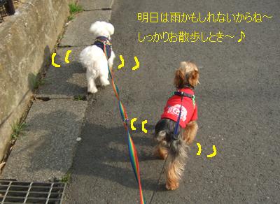 2010_03030013.jpg