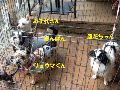 2010_03230015.jpg