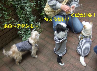 2010_03230019.jpg