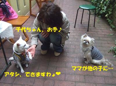 2010_03230023.jpg