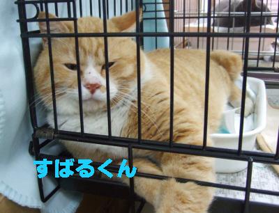 2010_03280001.jpg