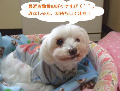 2010_04010002.jpg