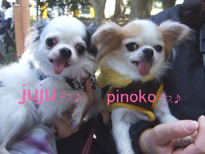 2010_04110015.jpg