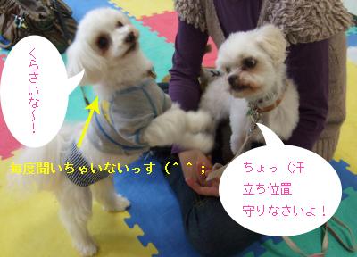 2010_04170001.jpg
