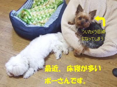 2010_05210009.jpg