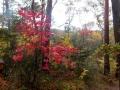 一雨降って、紅葉もしっとり